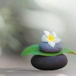 Summer Meditation Camp at Chicago-DDMBA